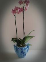 Orkidé skjuler i glas